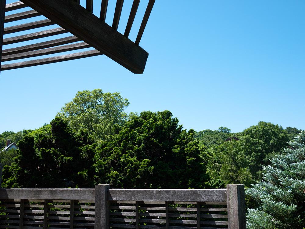 Arnold Arboretum 8