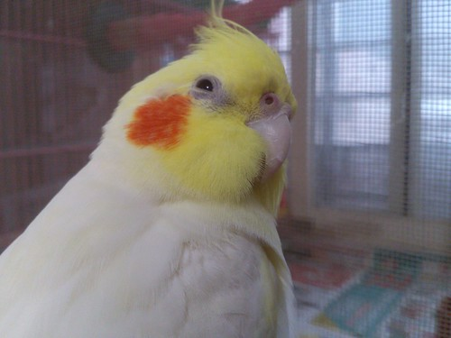 玄鳳鳥寶-粉圓的生日