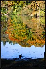 Bolam Lake, Belsay, Northumberland. Nov'12