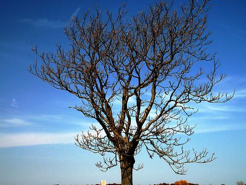 harris cemetery dead tree equ 084
