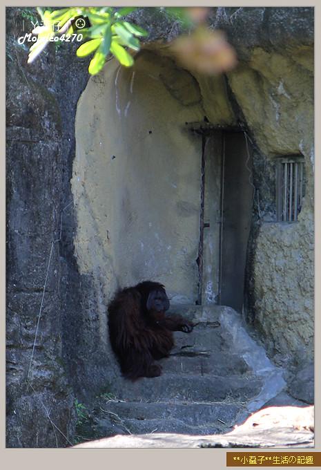 木柵動物園(圓仔)21