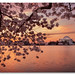 Jefferson Memorial Sunrise by Del.Higgins