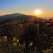 Roan Highlands' Glory by i_am_durin
