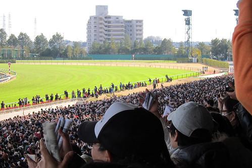 中京競馬場 / Chukyo Racecourse