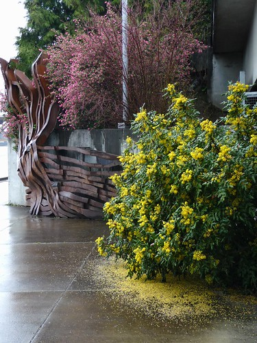 Oregon Grape & Red Flowering Currant w/Alluvial Wall