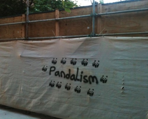 pandy