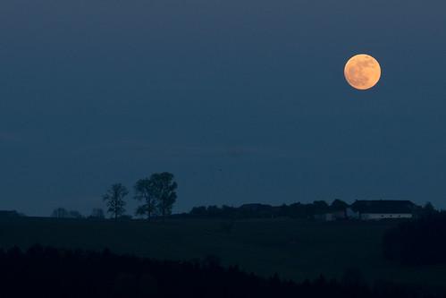 Mond1
