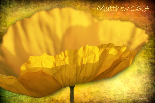 flower texture easter christian poppy bible mygearandme
