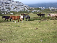 Pianu d'Urnucciu : le Pianu et ses chevaux