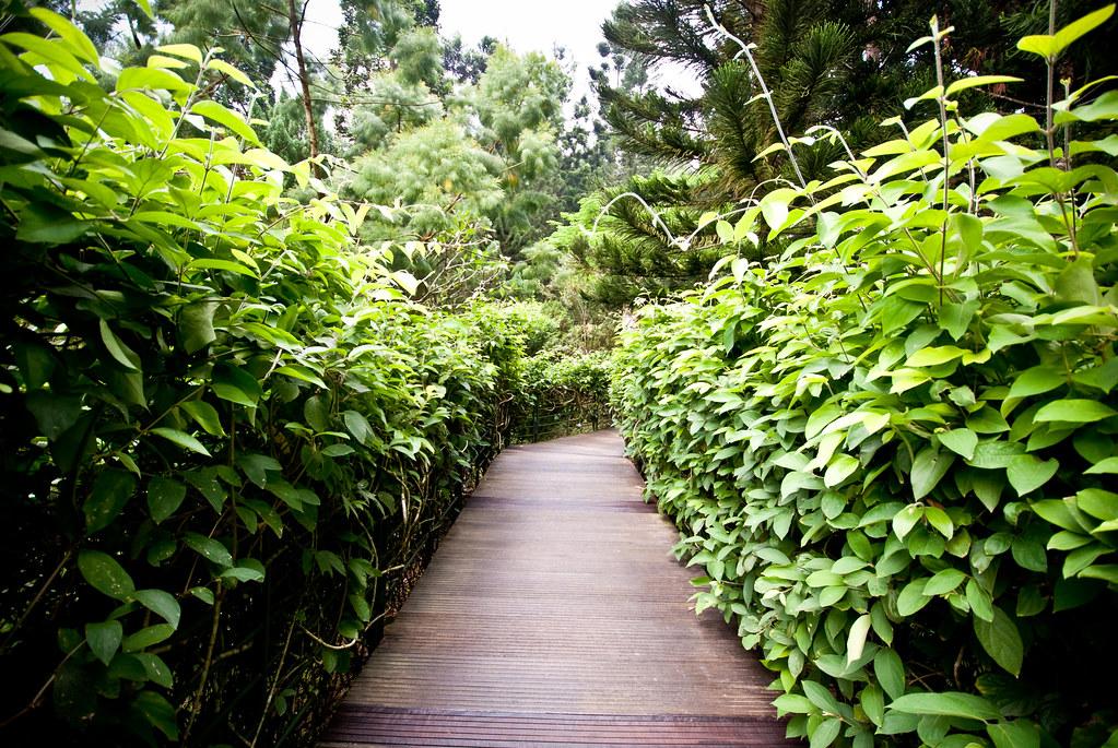 Jungle walkway