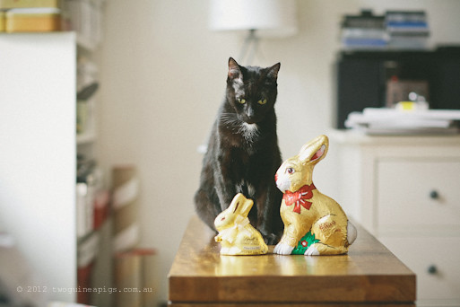 Easter Bunnies and 2 Black Cats, twoguineapigs pet photography 2