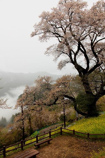 Hyotan Sakura_02