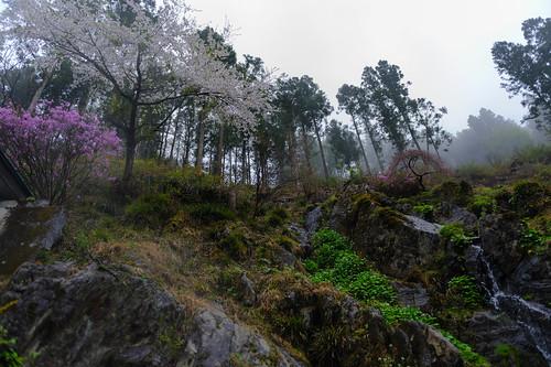 flowers trees japan hiking sakura takao 2012 jinba whitemist d700 afsnikkor2470mmf28ged 姫谷