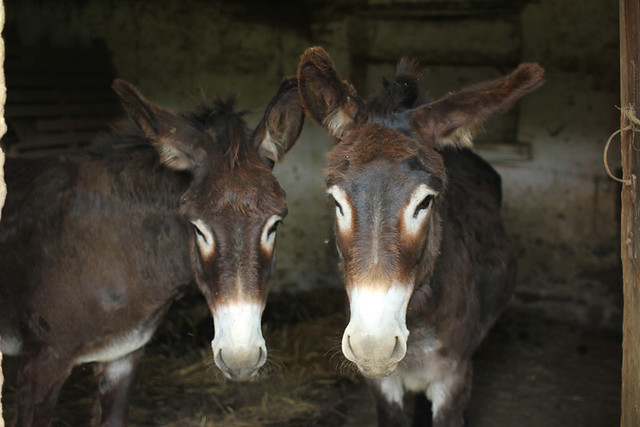 Donkey brothers