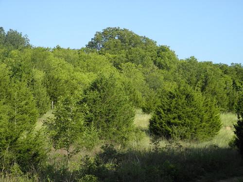 hillside, Trinity Trail