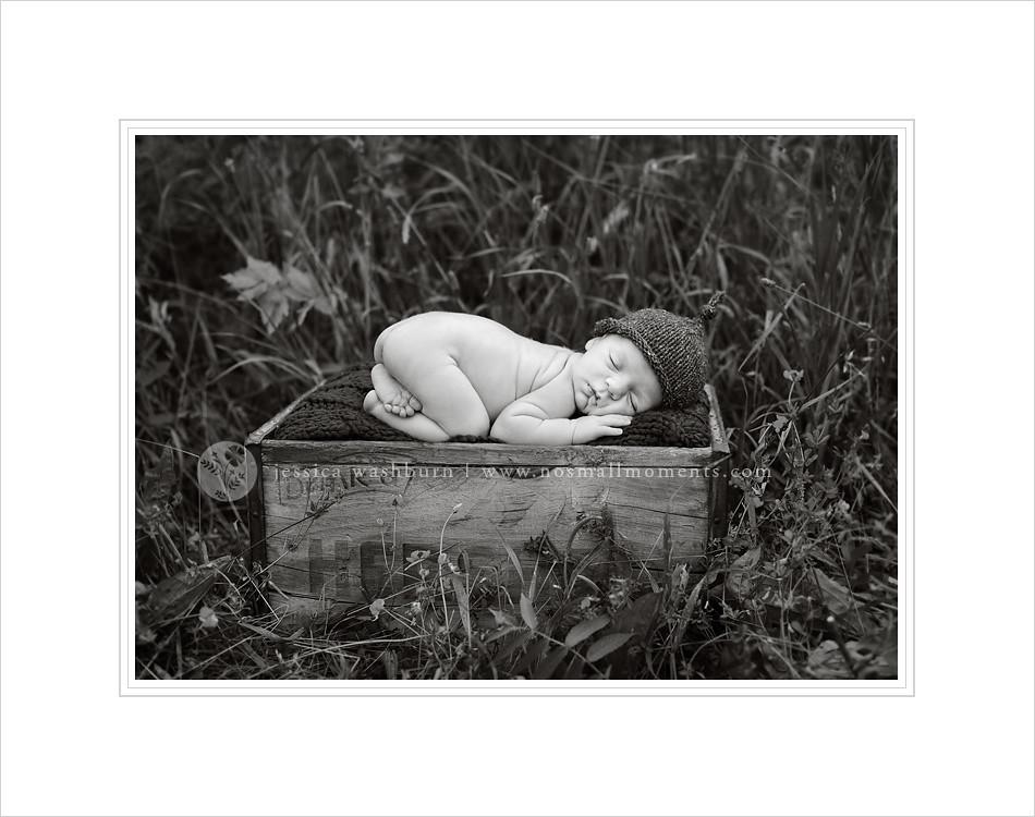 Saratoga newborn photographer