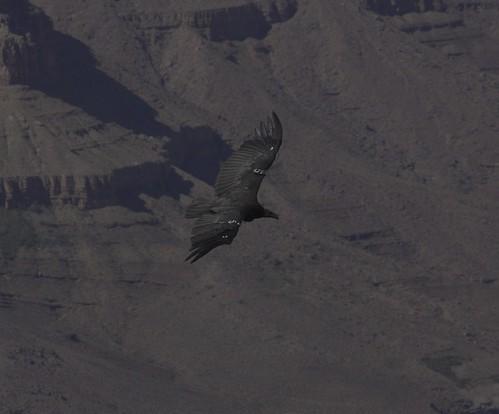 condor 5, second shot