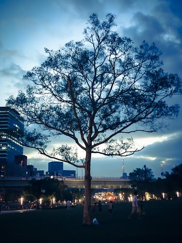 park sunset tree japan lumix panasonic osaka gf1 g20mmf17
