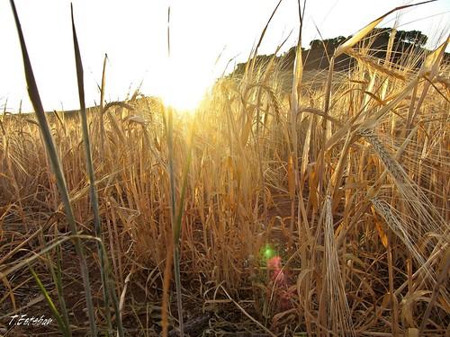 Puesta de sol en el campo de las Inviernas. (Guadalajara)