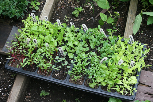 fall seedlings 003