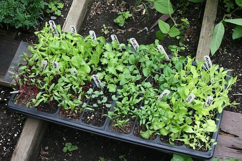 fall seedlings 003