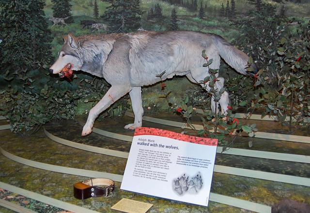 wolf-display