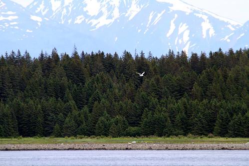 Leaving Glacier Bay - Birdy