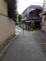 朝散歩 (2012/8/11)