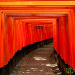 Torii (Gates) at Fushimi Inari Shrine - Kyoto, Japan