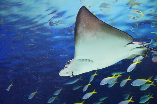 サンシャイン水族館#01