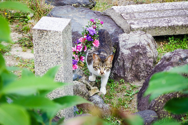 Today's Cat@2016-05-26