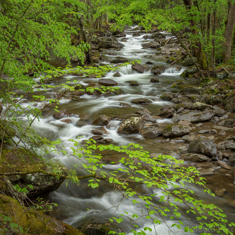 Elevation of laurel springs rd cosby tn usa for Laurel springs