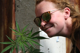 Weed grows on the streets