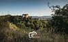 GCB-Passeggiate-Silvano-2802.jpg