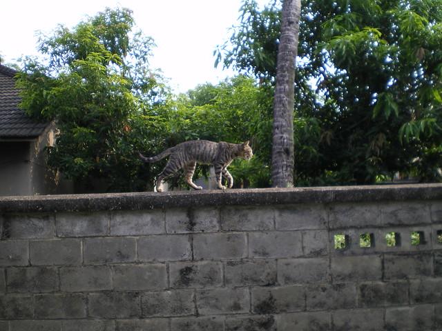 這邊的貓很喜歡跳上矮牆