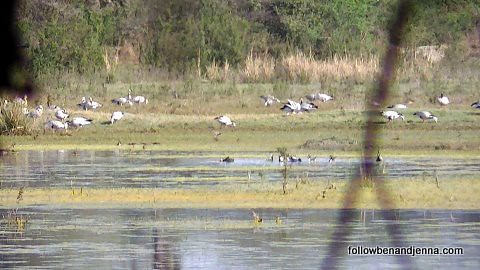Unwinding after a long bus ride: spying on migrating birds at Keoladeo National Park
