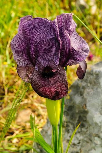 flowers israel mideast naturelandscape hagilboa northdistrict