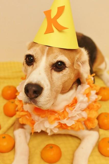 Orange Party (2)