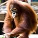 Zoo June 03