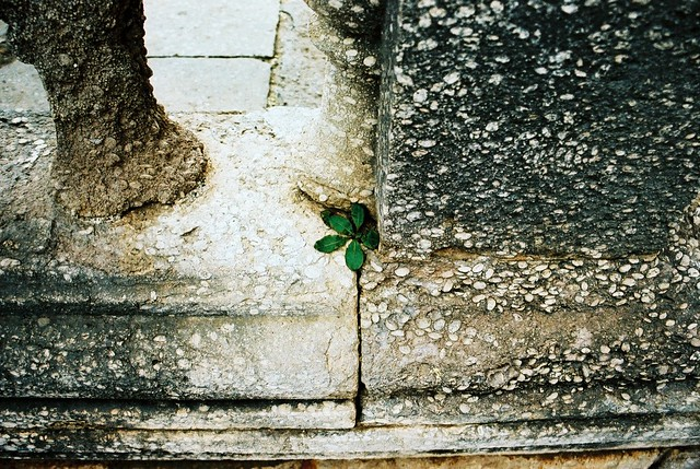 Verde entre pedra