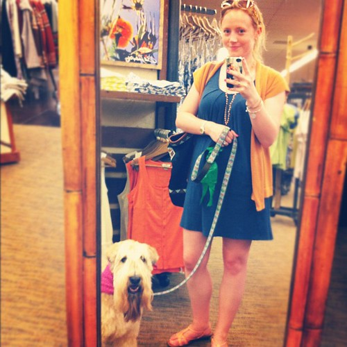 Shopping #softcoatedwheatenterrier #spoiled