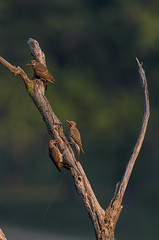 Flicker Family_8101.jpg by Mully410 * Images