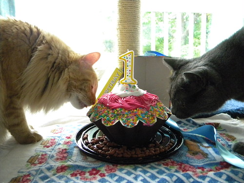 kitty birthday party (silly human)
