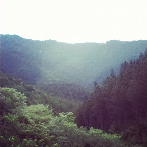 View on the way down from Koyasan. Check out that cryptomeria.