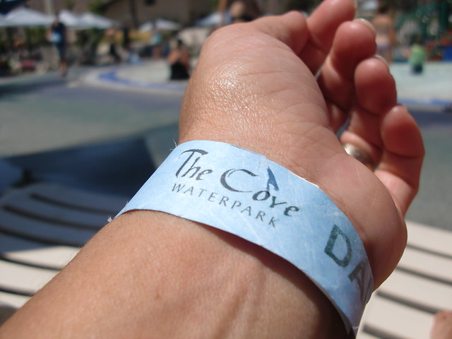 The Cove Band