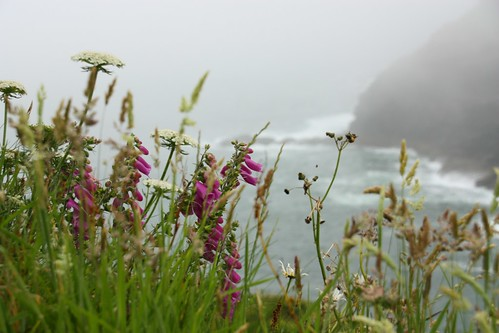 Wildflowers at The Haven, Tintagel
