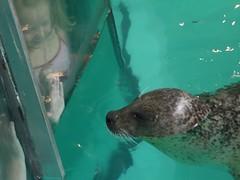 日, 2012-07-15 12:54 - Maritime Aquarium, アザラシ