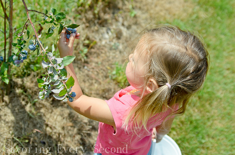 Blueberry Picking-011.jpg