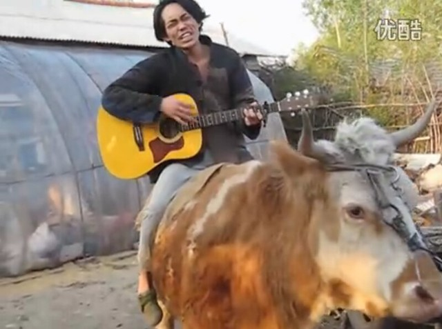 VIDEO: Chinese Man Singing Justin Bieber While Riding a Cow
