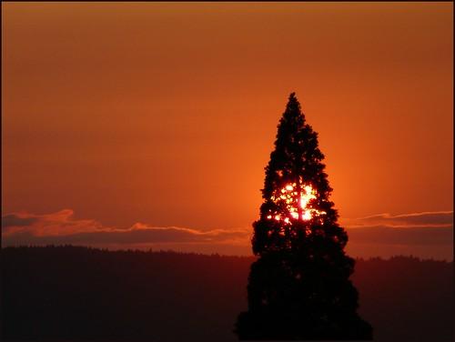 sunset tree silhouette saturday cliche